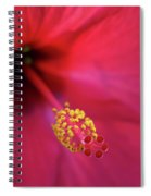 Center Of Attention - Hibiscus 01 Spiral Notebook