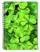 Certain Green Spiral Notebook