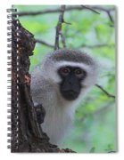 Chacma Baboon Spiral Notebook