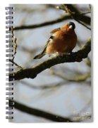 Chaffinch 3 Spiral Notebook