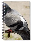 Chain Of Coos Spiral Notebook