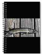 Chain Pike Spiral Notebook