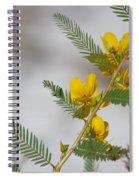Chamaecrista Fasciculata Sleeping Plant Partridge Pea Spiral Notebook