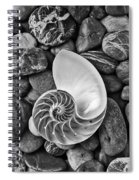 Chambered Nautilus Shell  On River Stones Spiral Notebook