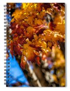 Changing Maples Spiral Notebook