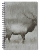 Charcoal Bull Elk In Field Spiral Notebook