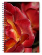 Charisma Roses 2 Spiral Notebook