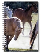 Chasing The Cows Spiral Notebook