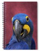 Cheeky Macaw Spiral Notebook