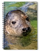 Cheeky Seal At Gweek Spiral Notebook