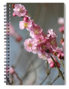 Cheerful Cherry Blossoms Spiral Notebook
