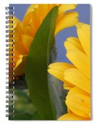 Cheerful Gerbera Daisies Spiral Notebook