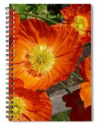 Cheerful Orange Flowers  Spiral Notebook