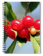 Cheery Cherries Spiral Notebook