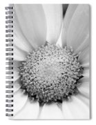 Cheery Daisy - Black And White Spiral Notebook