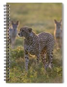 Cheetah Acinonyx Jubatus And Jackals Spiral Notebook