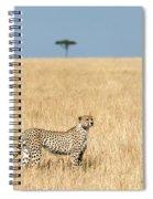 Cheetah Acinonyx Jubatus In Plains Spiral Notebook