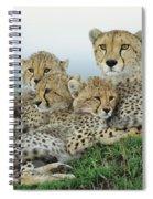 Cheetah And Her Cubs Spiral Notebook