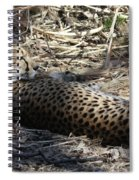 Cheetah Awakened Spiral Notebook