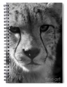 Cheetah Black And White Spiral Notebook