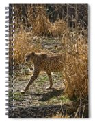 Cheetah  In The Brush Spiral Notebook