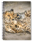 Cheetah Lounge Cats Spiral Notebook