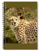 Cheetah Portrait Spiral Notebook