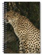 Cheetah Watching Spiral Notebook