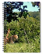 Cheetah Zoo Landscape Spiral Notebook