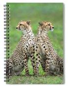 Cheetahs Acinonyx Jubatus In Forest Spiral Notebook