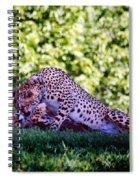 Cheetahs In Love Spiral Notebook