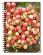 Cherries 8 Spiral Notebook