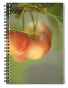 Cherries Hanging On A Branch Spiral Notebook