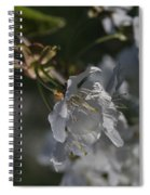 Cherry Blossom 5 Spiral Notebook