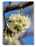 Pear Blossom And Bee Spiral Notebook