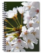 Cherry Blossom Cluster Spiral Notebook