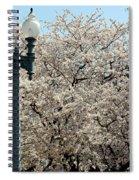 Cherry Blossom Festival Spiral Notebook