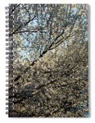 Cherry Blossom Spiral Notebook
