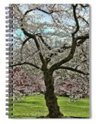 Cherry Blossom Trees Of Branch Brook Park 31 Spiral Notebook