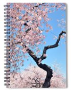 Cherry Blossom Trilogy II Spiral Notebook