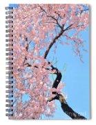 Cherry Blossom Trilogy IIi Spiral Notebook