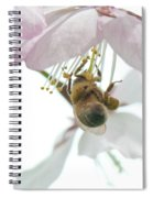 Cherry Blossom With Bee Spiral Notebook