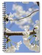 Cherry Blossoms And Bumblebee Spiral Notebook