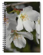 Cherry Blossoms II Spiral Notebook