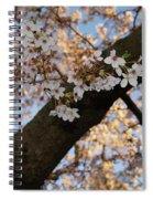 Cherry Blossoms Spiral Notebook
