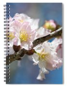 Cherry Blossoms On Blue Spiral Notebook