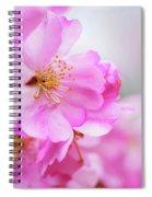 Cherry Blossoms Sweet Pink Spiral Notebook