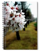 Cherry Blossoms Trail Spiral Notebook