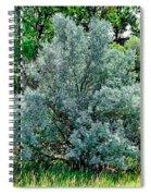 Cherry Creek Trail Study 2 Spiral Notebook