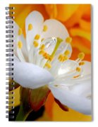 Cherry Flower In The Spring, In Profile Spiral Notebook